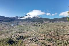 ALMADEN Y OLIVOS DESDE CTRA ALBANCHEZ